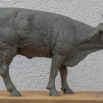 Kühe 008